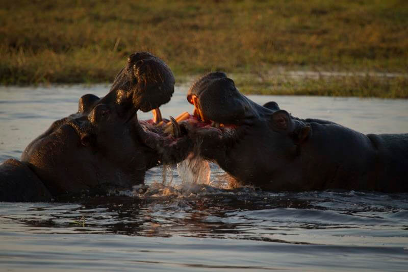 Un viaje express por Botswana