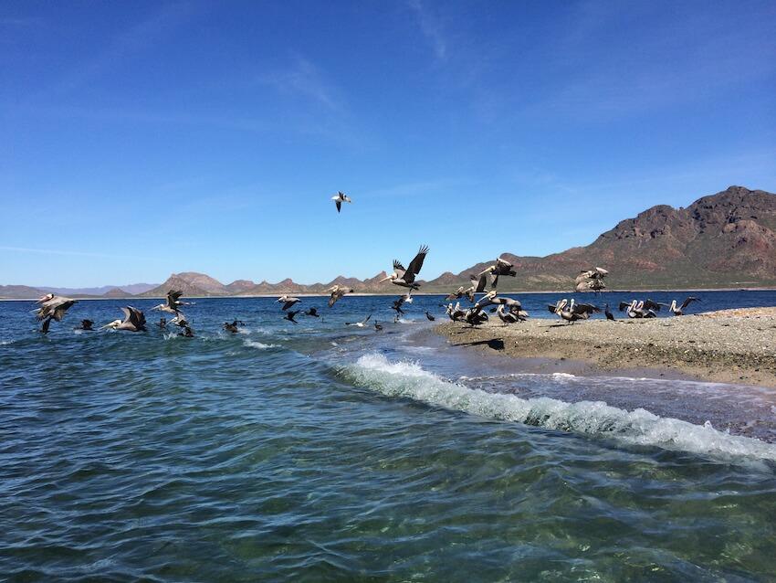 Disfruta de unos días de aventura en Guaymas
