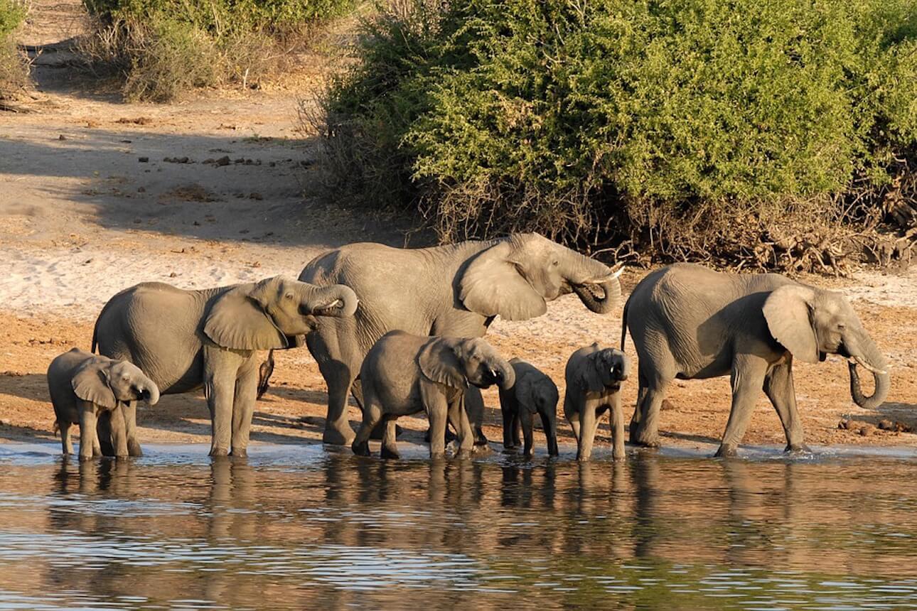 Africa Pride, safaris de ensueño por Botswana