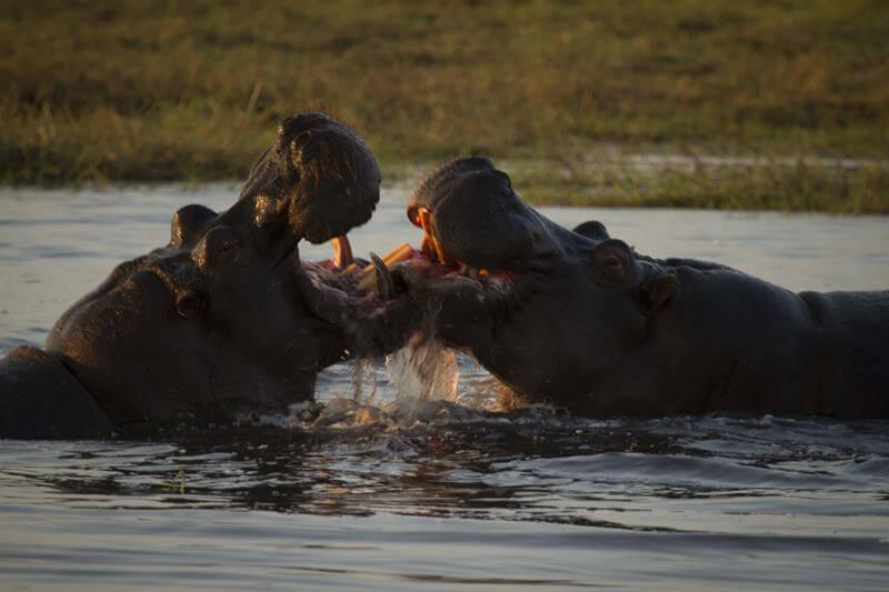 Sumérgete en la ruta de los 3 ríos de Botswana