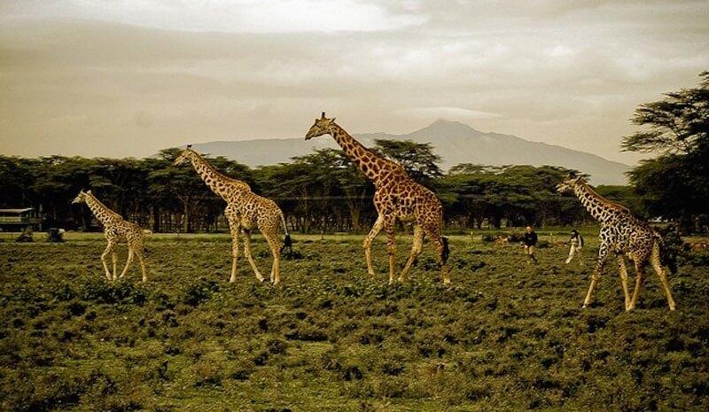 Safari estrella: Lo mejor de Kenia y Tanzania en 10 días
