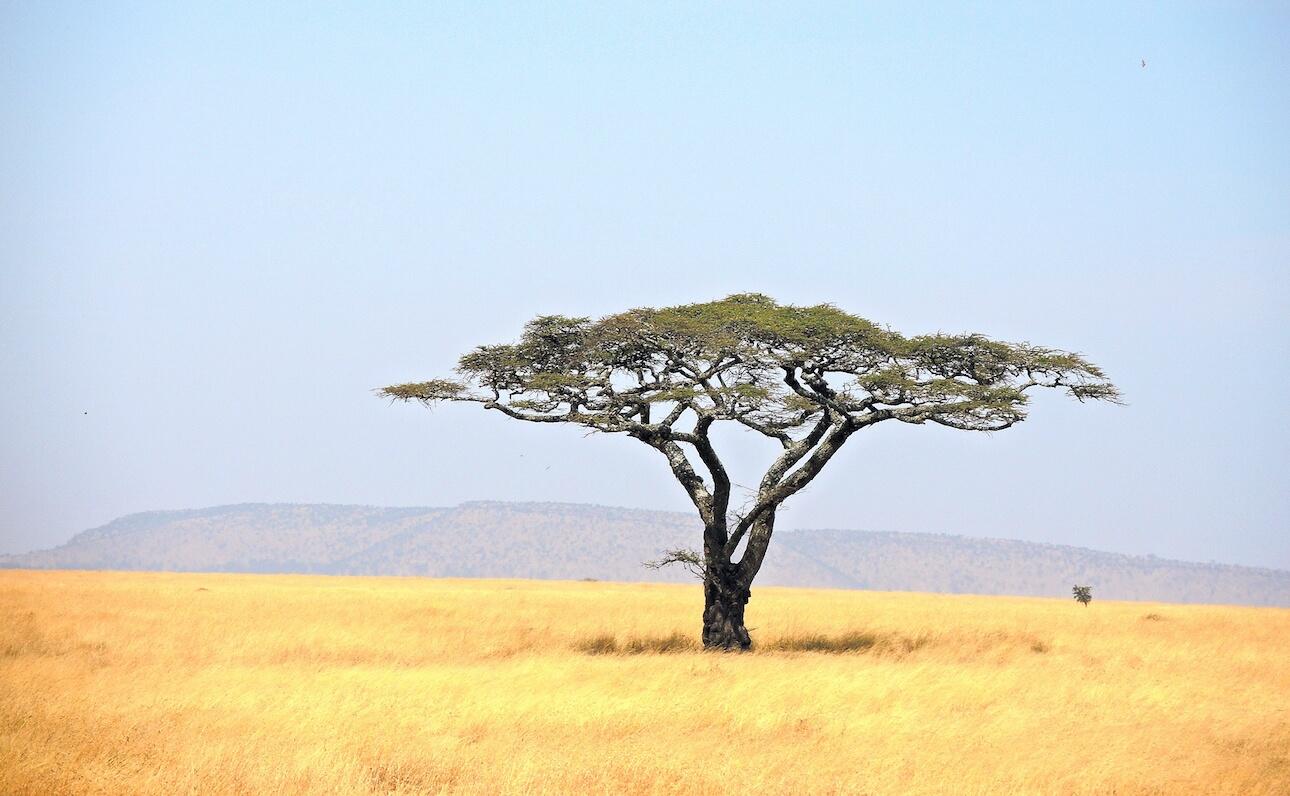 Conoce los trámites necesarios para viajar a Tanzania