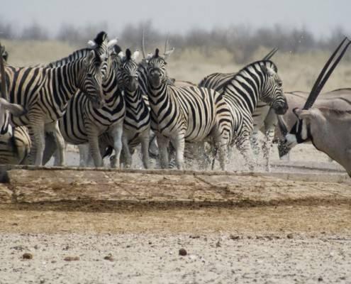 Mopane Game Safaris, una forma única de descubrir Botswana