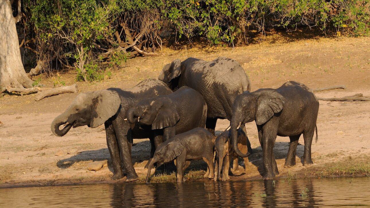 Vacunas necesarias para viajar a Botswana
