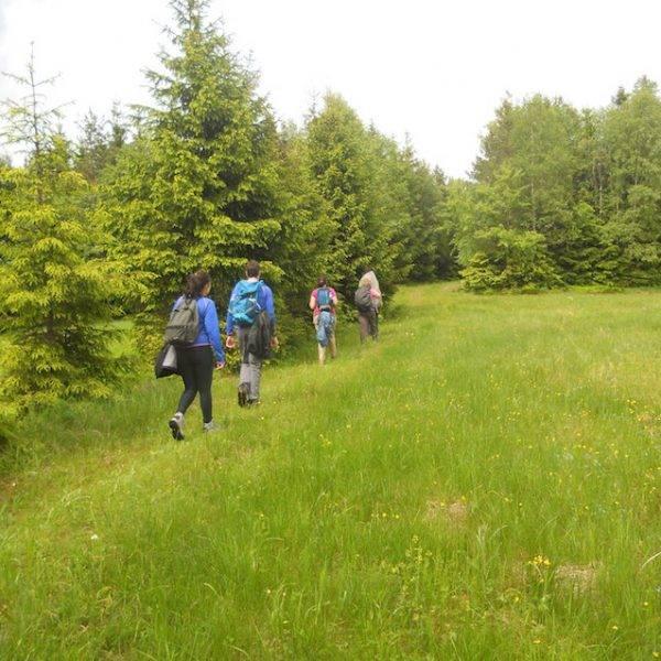 Semana de senderismo en el Parque Nacional de La Selva Negra