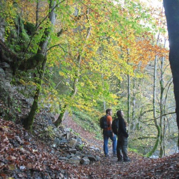 Senderismo en el Parque Nacional de La Selva Negra